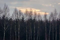 Δάσος στην περιοχή Podlasie Στοκ φωτογραφίες με δικαίωμα ελεύθερης χρήσης