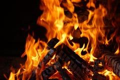 Δάσος στην πυρκαγιά Στοκ εικόνα με δικαίωμα ελεύθερης χρήσης