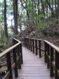 Δάσος στην Ταϊλάνδη για το ταξίδι Στοκ φωτογραφία με δικαίωμα ελεύθερης χρήσης
