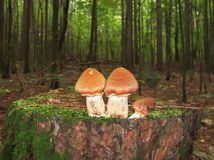 δάσος στην υποδοχή Στοκ Φωτογραφία