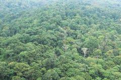 Δάσος στην υδρονέφωση Στοκ εικόνες με δικαίωμα ελεύθερης χρήσης