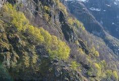 Δάσος στη θέα βουνού στοκ φωτογραφία