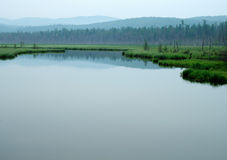 Δάσος στη λίμνη Δέντρα που απεικονίζονται στο νερό misty πρωί λιμνών bacrground νωρίς εύκολο πρωί ομίχλης που περνά τις θερινές η Στοκ εικόνα με δικαίωμα ελεύθερης χρήσης