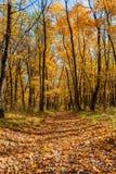 Δάσος στη χρυσή εποχή του φθινοπώρου, των πεσμένων φύλλων και του ήλιου στοκ φωτογραφία με δικαίωμα ελεύθερης χρήσης