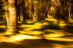 Δάσος στη χρυσή θαμπάδα κινήσεων Στοκ Εικόνες