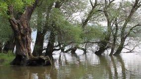 Δάσος στις τράπεζες του Δούναβη απόθεμα βίντεο