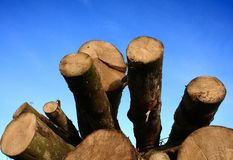 δάσος στοιβών Στοκ φωτογραφίες με δικαίωμα ελεύθερης χρήσης