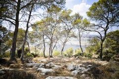 δάσος στοιχήματος shemesh στοκ εικόνες