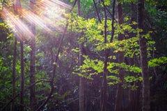 Δάσος στον ήλιο στοκ φωτογραφία με δικαίωμα ελεύθερης χρήσης