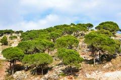 Δάσος στους βράχους Στοκ φωτογραφίες με δικαίωμα ελεύθερης χρήσης