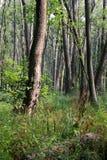 Δάσος στο έλος Στοκ φωτογραφίες με δικαίωμα ελεύθερης χρήσης