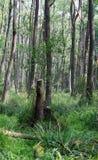 Δάσος στο έλος Στοκ φωτογραφία με δικαίωμα ελεύθερης χρήσης