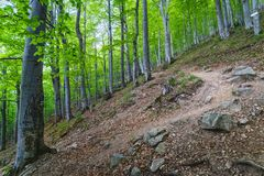 Δάσος στο βαλκανικό βουνό, Βουλγαρία στοκ φωτογραφία με δικαίωμα ελεύθερης χρήσης