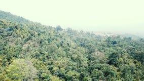 Δάσος στο βουνό απόθεμα βίντεο