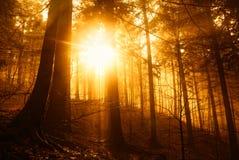 Δάσος στο ηλιοβασίλεμα στοκ φωτογραφία με δικαίωμα ελεύθερης χρήσης