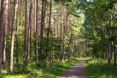 Δάσος στο θερινό ήλιο Στοκ Φωτογραφία