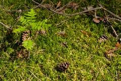 Δάσος στο θερινό ήλιο Στοκ φωτογραφία με δικαίωμα ελεύθερης χρήσης