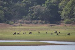 Δάσος στο Κεράλα στοκ εικόνα