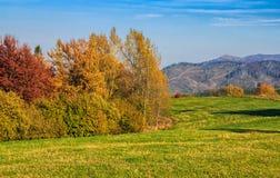 Δάσος στο κόκκινο φύλλωμα την ηλιόλουστη ημέρα φθινοπώρου Στοκ φωτογραφίες με δικαίωμα ελεύθερης χρήσης