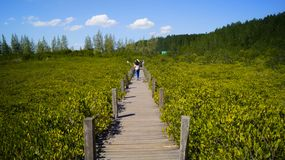 Δάσος στο νερό Στοκ Εικόνες