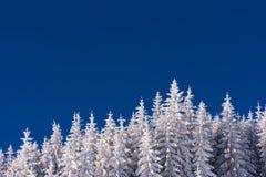 Δάσος στο χιόνι στο υπόβαθρο μπλε ουρανού Στοκ Φωτογραφίες