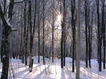 Δάσος στο χιόνι το χειμώνα Στοκ φωτογραφία με δικαίωμα ελεύθερης χρήσης