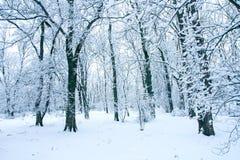 Δάσος στο χιόνι Στοκ φωτογραφία με δικαίωμα ελεύθερης χρήσης