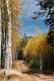 Δάσος στο χρόνο φθινοπώρου στοκ εικόνες με δικαίωμα ελεύθερης χρήσης