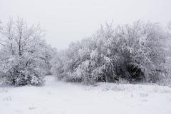 Δάσος στο hoarfrost Στοκ εικόνα με δικαίωμα ελεύθερης χρήσης