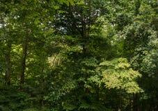 Δάσος στο pano καλοκαιριού Στοκ Εικόνες