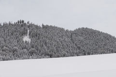 Δάσος στο wintertime Στοκ Εικόνες