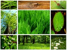δάσος συλλογής Στοκ Εικόνα