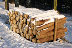 δάσος σωρών Στοκ φωτογραφία με δικαίωμα ελεύθερης χρήσης
