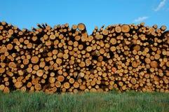 δάσος σωρών στοκ εικόνες