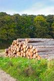 δάσος σωρών Στοκ Φωτογραφίες