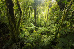Δάσος σύννεφων από τη Κόστα Ρίκα στοκ φωτογραφία