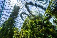 Δάσος σύννεφων της Misty στους κήπους από τον κόλπο, Σιγκαπούρη Στοκ φωτογραφία με δικαίωμα ελεύθερης χρήσης