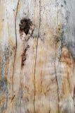 δάσος σύστασης Στοκ Εικόνες