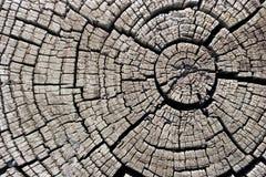δάσος σύστασης Στοκ εικόνα με δικαίωμα ελεύθερης χρήσης