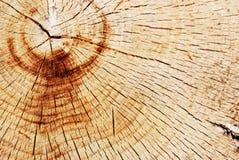 δάσος σύστασης Στοκ φωτογραφίες με δικαίωμα ελεύθερης χρήσης