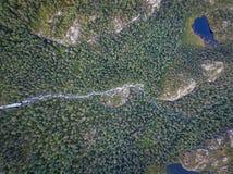 Δάσος της Νορβηγίας Στοκ φωτογραφία με δικαίωμα ελεύθερης χρήσης