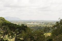 Δάσος της Σρι Λάνκα με τη λίμνη Στοκ εικόνα με δικαίωμα ελεύθερης χρήσης