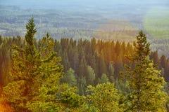 Δάσος της Φινλανδίας στο ηλιοβασίλεμα Εθνικό πάρκο Koli Περιοχή Pielinen στοκ φωτογραφία με δικαίωμα ελεύθερης χρήσης