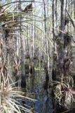Δάσος της Φλώριδας Στοκ Φωτογραφίες