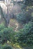 Δάσος της Φλώριδας Στοκ εικόνα με δικαίωμα ελεύθερης χρήσης