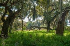 Δάσος της Φλώριδας στοκ εικόνες με δικαίωμα ελεύθερης χρήσης