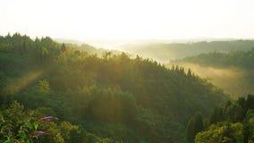 Δάσος της Misty στην ανατολή Στοκ Εικόνα