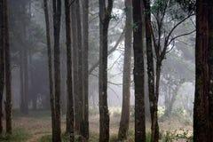 Δάσος της Misty στην Ινδία Στοκ Φωτογραφίες