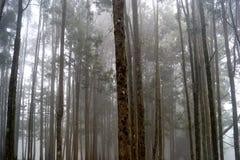 Δάσος της Misty στην Ινδία Στοκ φωτογραφία με δικαίωμα ελεύθερης χρήσης