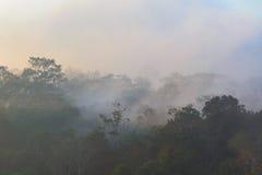 Δάσος της Misty στη βουνοπλαγιά σε μια φύση Στοκ εικόνα με δικαίωμα ελεύθερης χρήσης